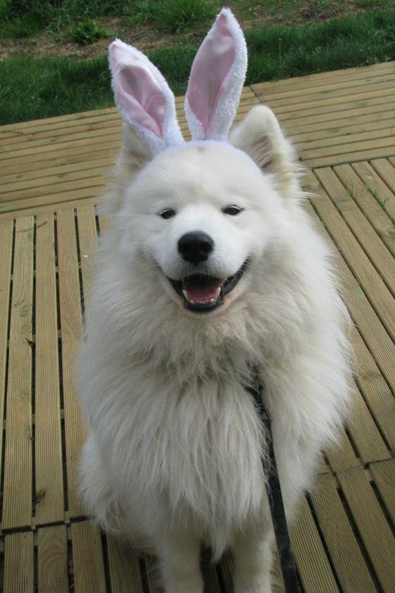 Easter Woola